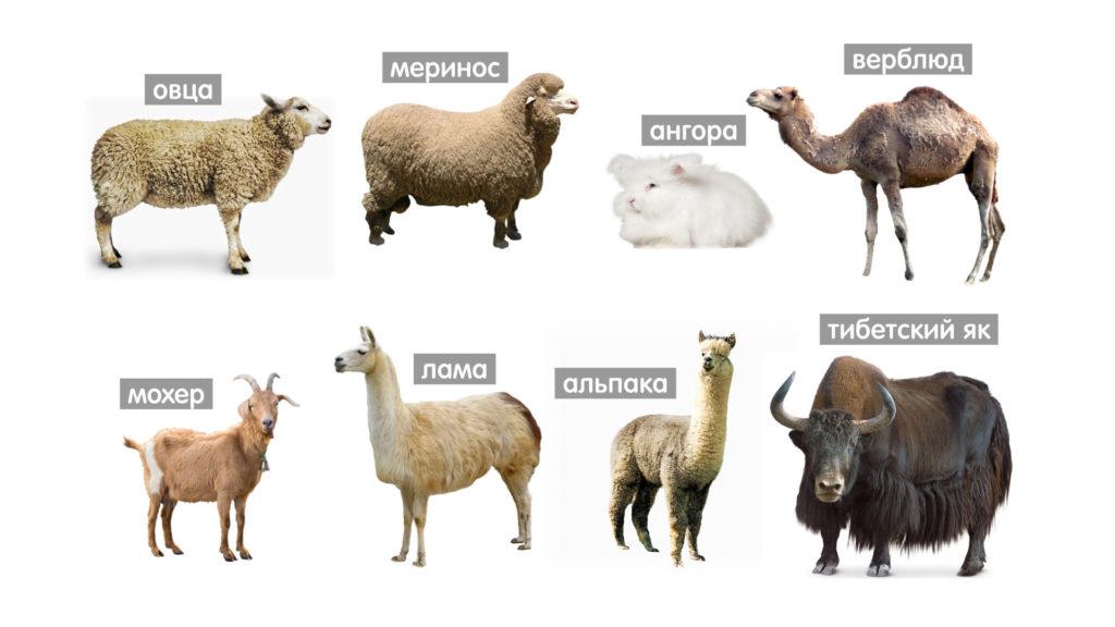 Животные, дающие шерсть для валяния